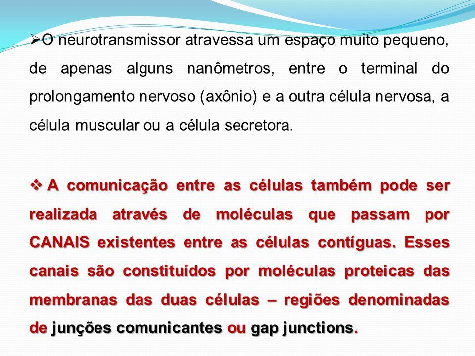  O neurotransmissor atravessa um espaço muito pequeno, de apenas alguns nanômetros, entre o terminal do prolongamento nervoso (axônio) e a outra célu