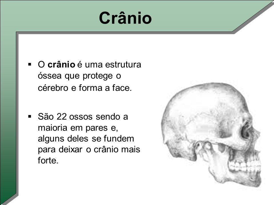 Crânio  O crânio é uma estrutura óssea que protege o cérebro e forma a face.