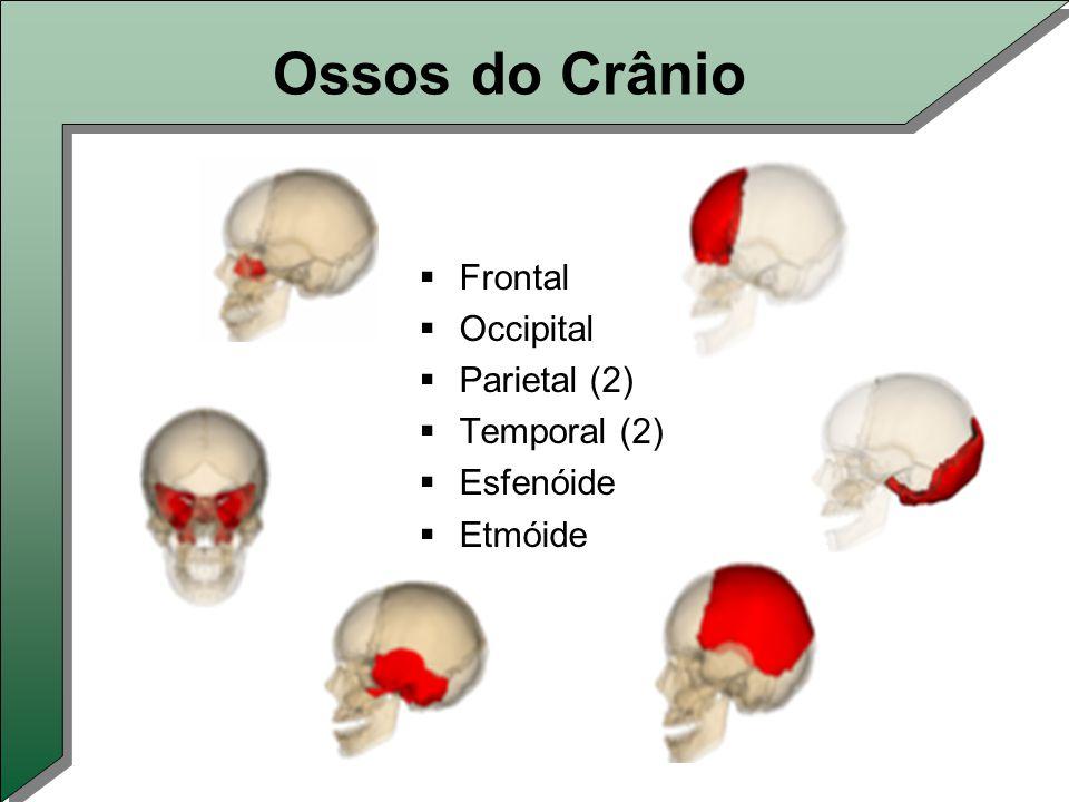 Ossos do Crânio  Frontal  Occipital  Parietal (2)  Temporal (2)  Esfenóide  Etmóide