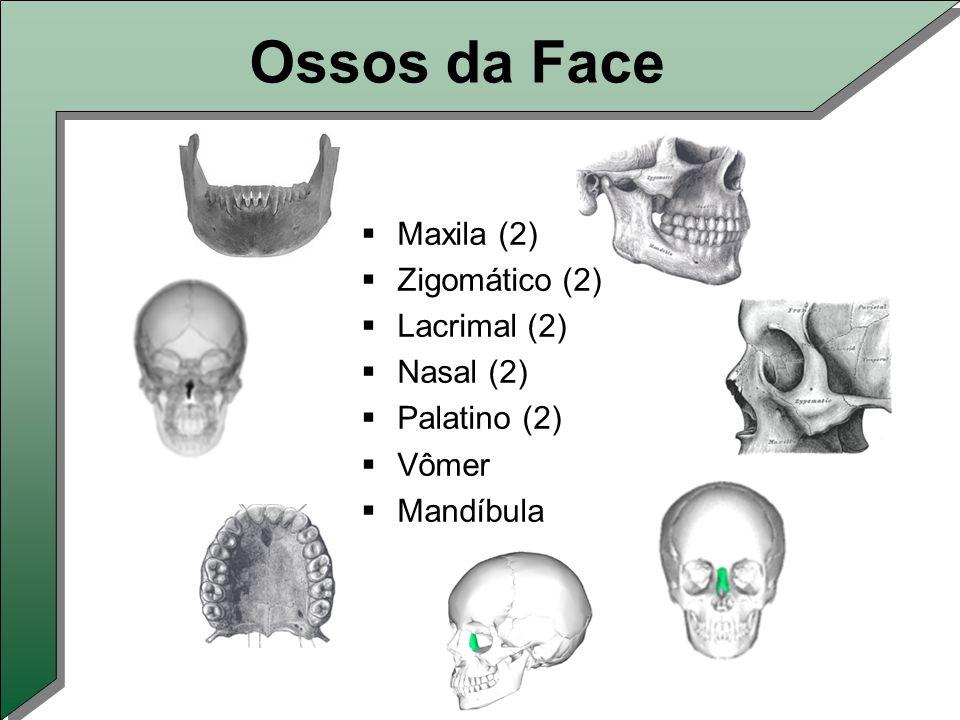 Ossos da Face  Maxila (2)  Zigomático (2)  Lacrimal (2)  Nasal (2)  Palatino (2)  Vômer  Mandíbula