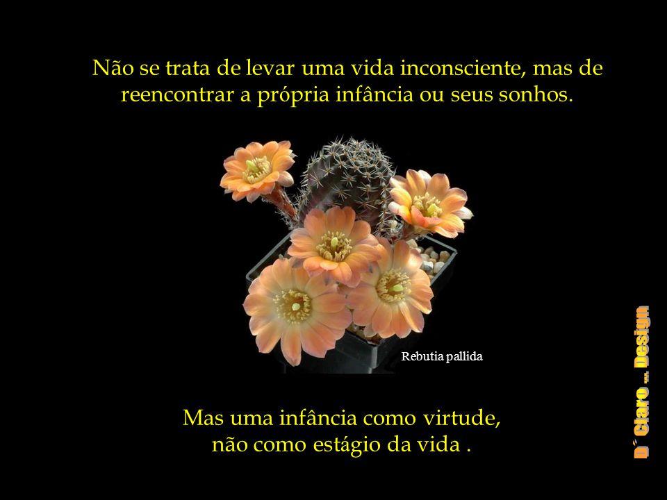 Escobaria wissmannii Um Sonho simples não calcula os resultados de cada gesto, não tem artimanhas e nem segundas inten ç ões ele se eterniza em partes, aos poucos, a cada dia!