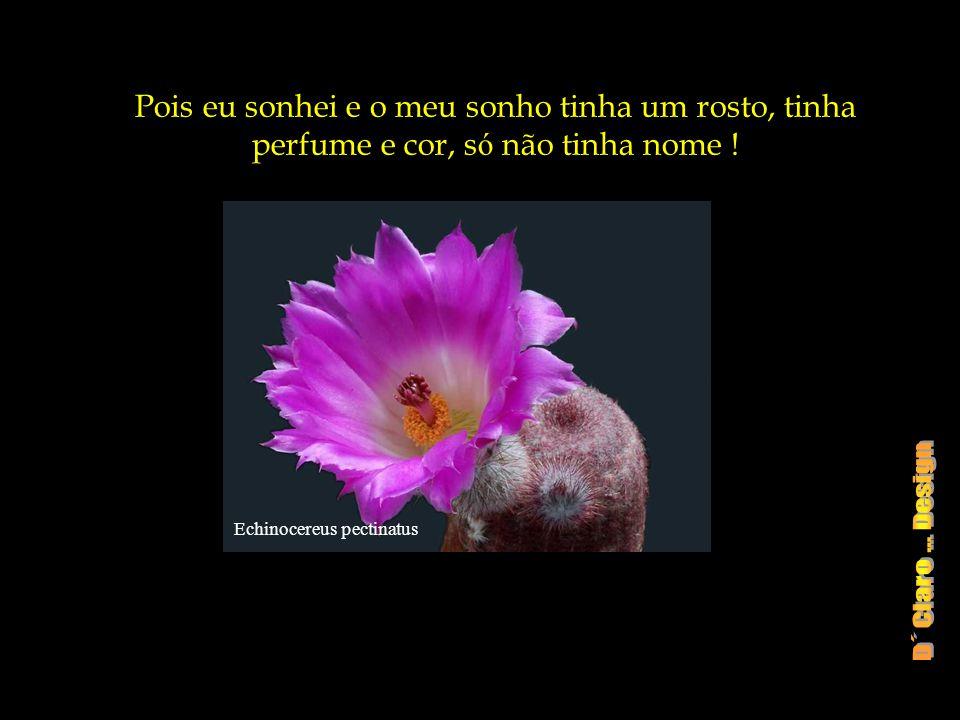 Echinocereus subinermis Sem saltos de imagina ç ão, ou sonhos, n ó s perdemos a excita ç ão das possibilidades.