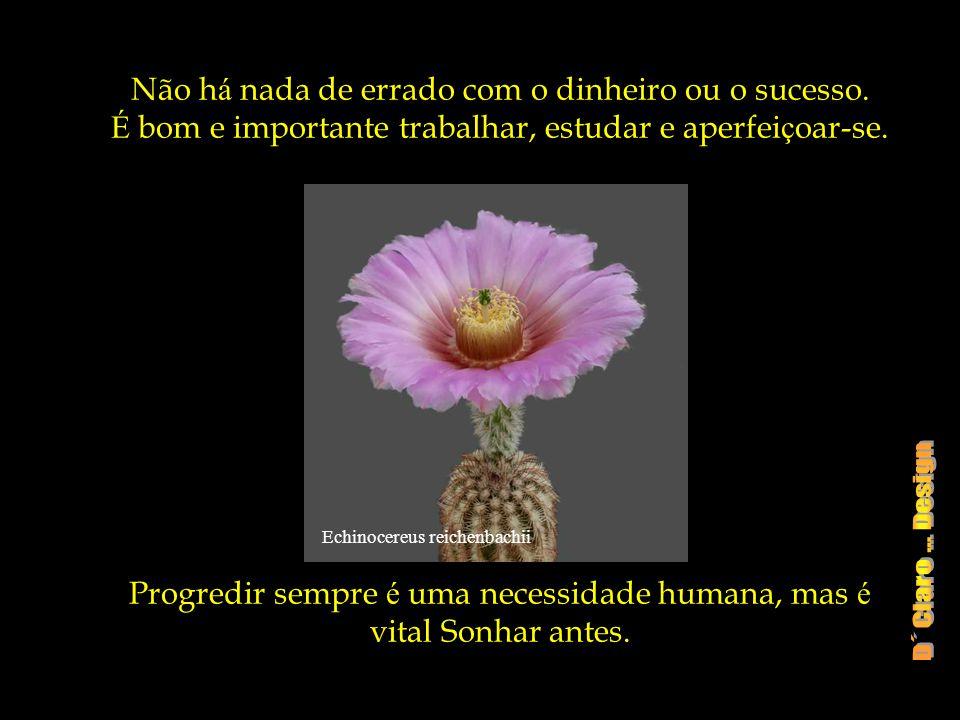Echinocereus klapperi Mas é dif í cil ter felicidade sem tempo para fazer o que se Sonhou e o que se gosta.