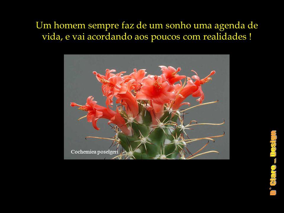 Echinocereus pectinatus Pois eu sonhei e o meu sonho tinha um rosto, tinha perfume e cor, s ó não tinha nome !