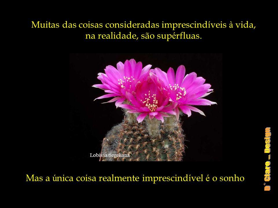 Mammillaria albiflora Uma infância de Sonhos, não se angustia com as d ú vidas de quem ainda tem tudo por fazer e realizar.