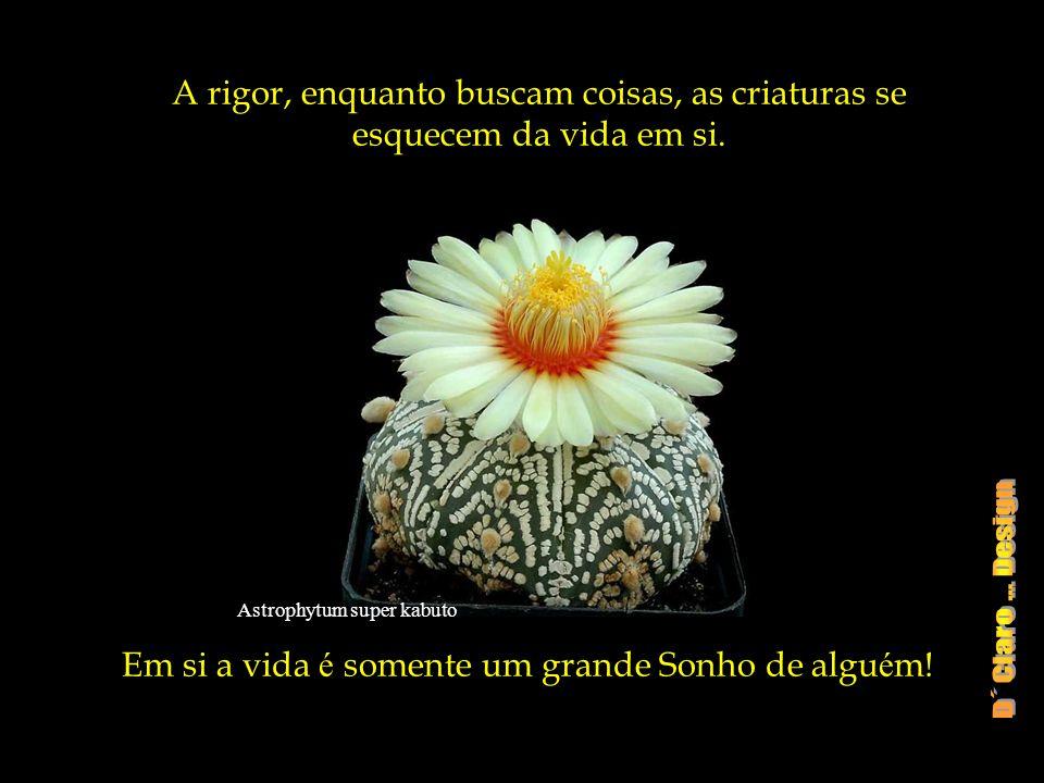 Astrophytum super kabuto A rigor, enquanto buscam coisas, as criaturas se esquecem da vida em si.