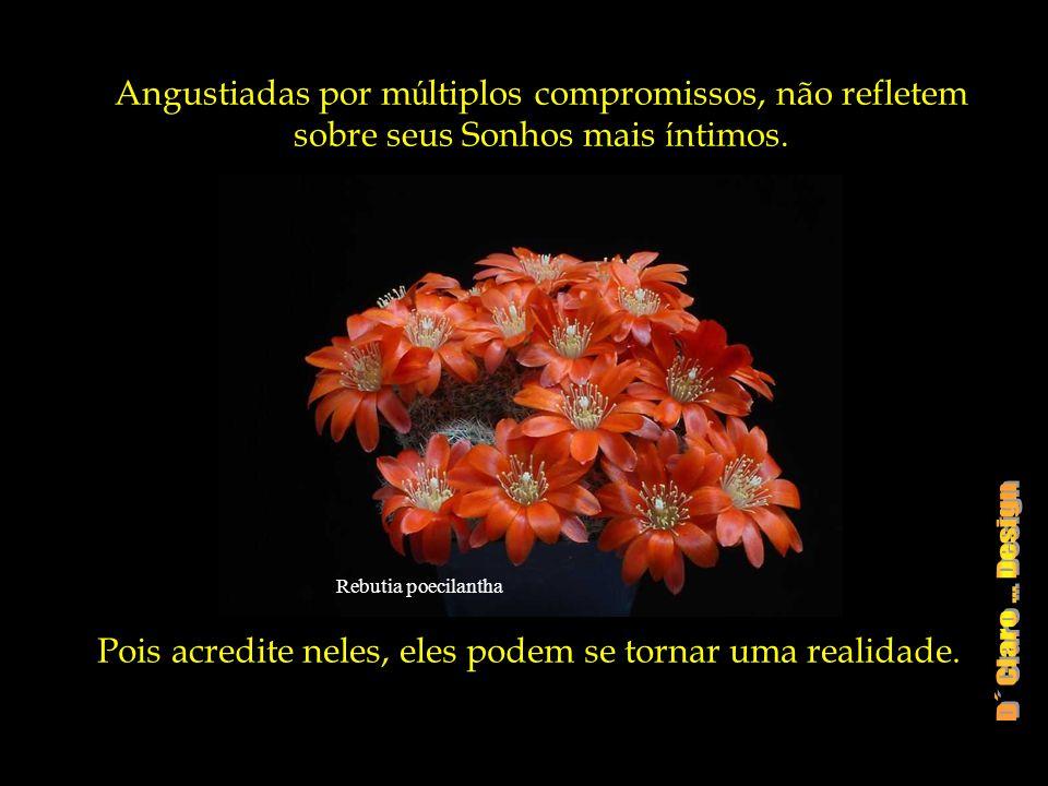 Rebutia poecilantha Angustiadas por m ú ltiplos compromissos, não refletem sobre seus Sonhos mais í ntimos.