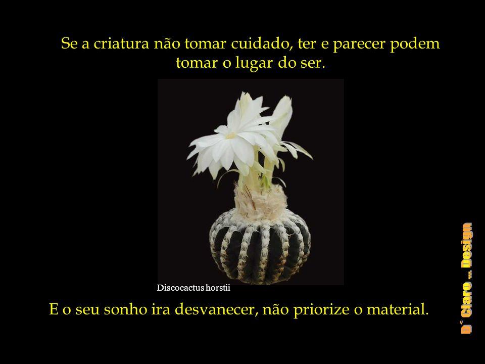 Ortegocactus macdougallii Experimente desapegar-se dos excessos.