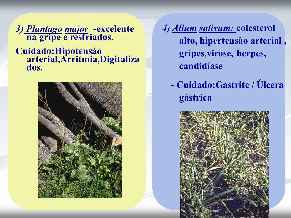 3) Plantago major -excelente na gripe e resfriados. Cuidado:Hipotensão arterial,Arritmia,Digitaliza dos. 4) Alium sativum: colesterol alto, hipertensã