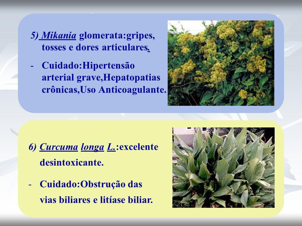 5) Mikania glomerata:gripes, tosses e dores articulares. -Cuidado:Hipertensão arterial grave,Hepatopatias crônicas,Uso Anticoagulante. 6) Curcuma long
