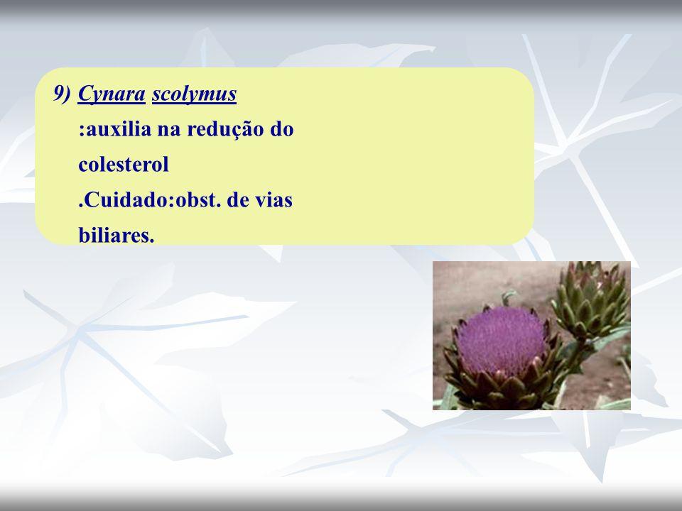 9) Cynara scolymus :auxilia na redução do colesterol.Cuidado:obst. de vias biliares.