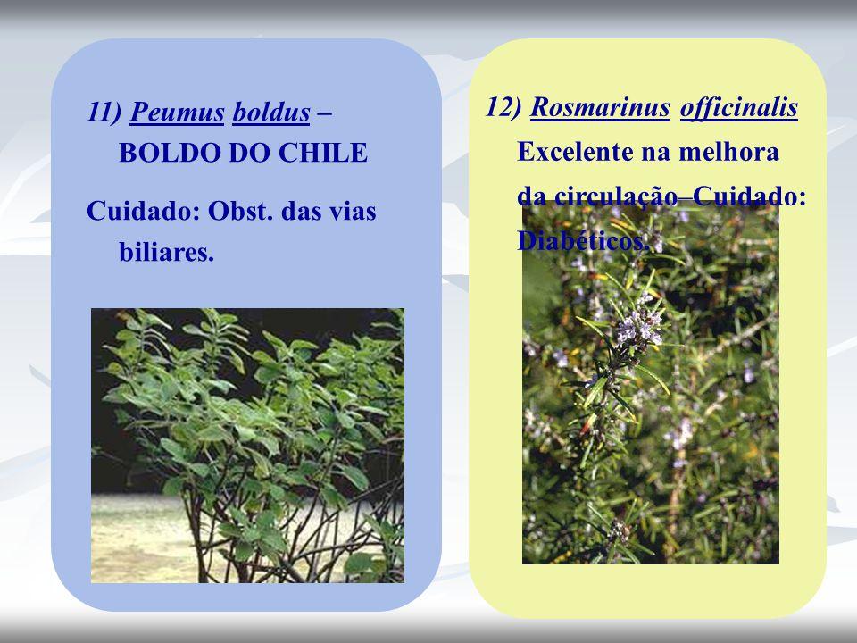 11) Peumus boldus – BOLDO DO CHILE Cuidado: Obst. das vias biliares. 12) Rosmarinus officinalis Excelente na melhora da circulação–Cuidado: Diabéticos