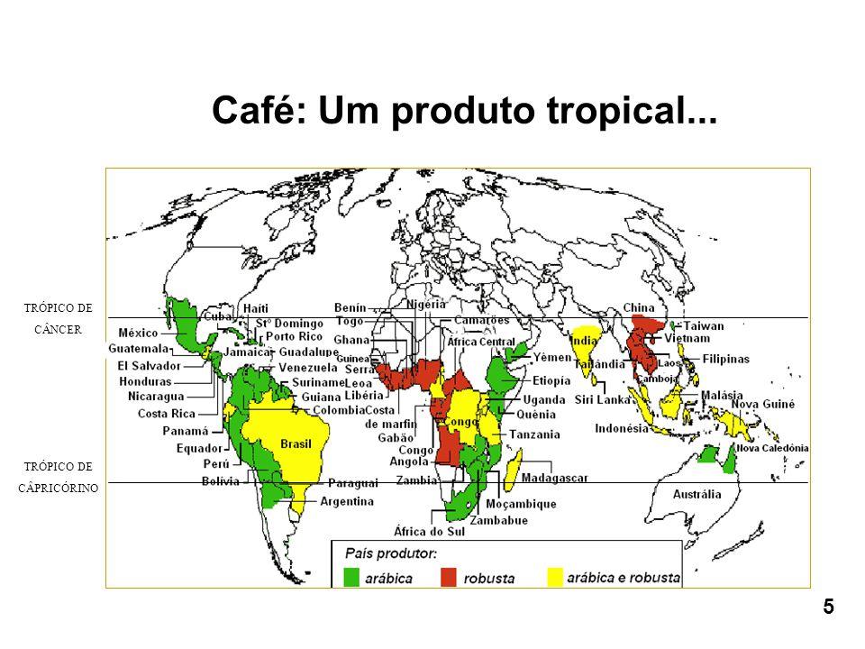 Café: Um produto tropical... 5 TRÓPICO DE CÂNCER TRÓPICO DE CÂPRICÓRINO