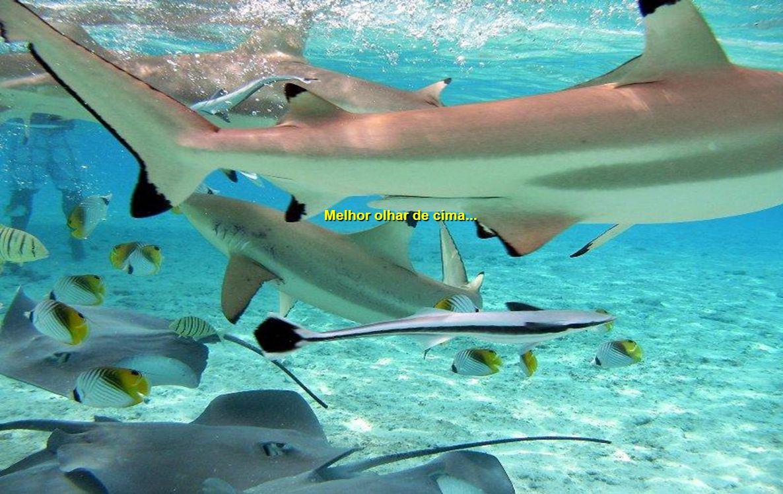 e tubarões!