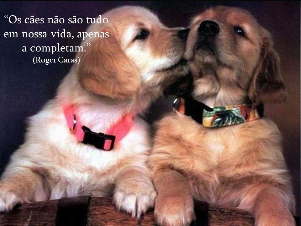 """""""Os cães amam seus amigos e mordem seus inimigos, ao contrário das pessoas que tentam misturar amor e ódio."""" (Sigmund Freud)"""