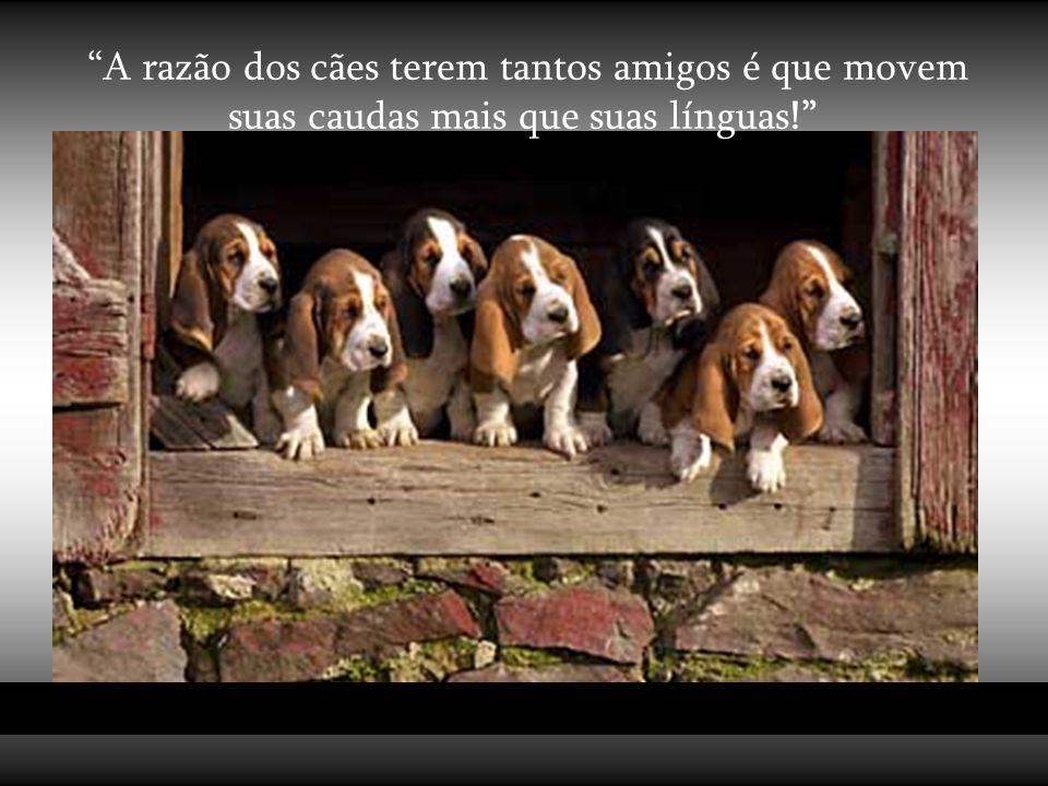 """""""Os cães não são tudo em nossa vida, apenas a completam."""" (Roger Caras)"""