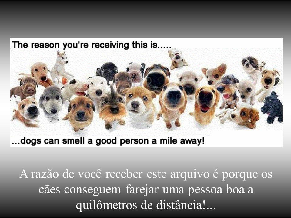"""""""A razão dos cães terem tantos amigos é que movem suas caudas mais que suas línguas!"""""""