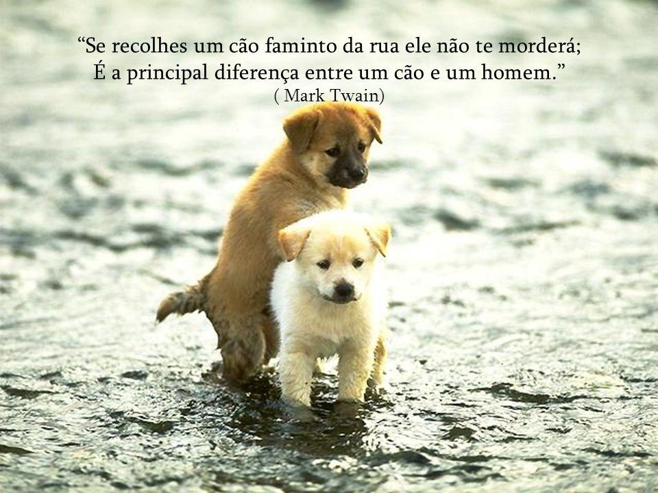 Se recolhes um cão faminto da rua ele não te morderá; É a principal diferença entre um cão e um homem. ( Mark Twain)