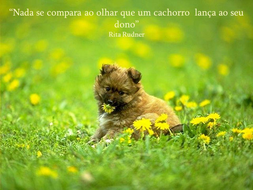 Nada se compara ao olhar que um cachorro lança ao seu dono Rita Rudner