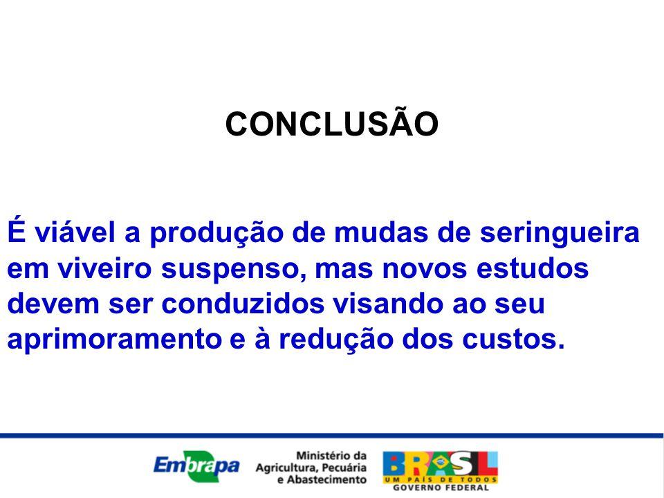 CONCLUSÃO É viável a produção de mudas de seringueira em viveiro suspenso, mas novos estudos devem ser conduzidos visando ao seu aprimoramento e à redução dos custos.