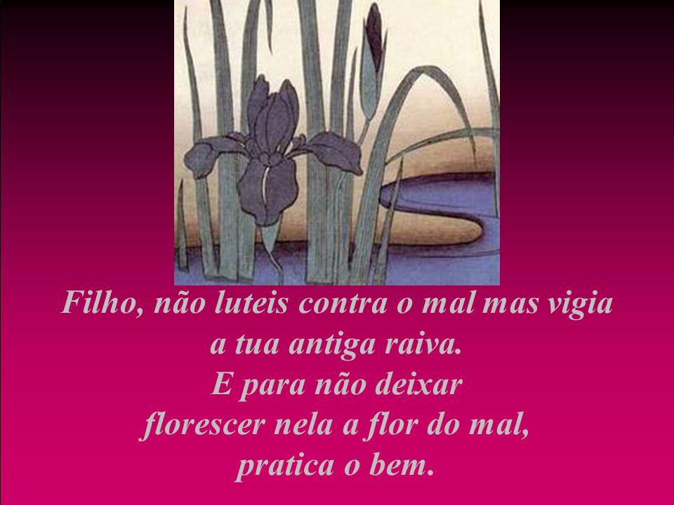 Filho, não luteis contra o mal mas vigia a tua antiga raiva. E para não deixar florescer nela a flor do mal, pratica o bem.