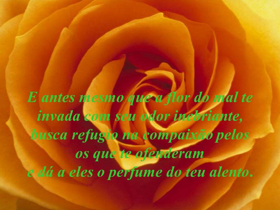 E antes mesmo que a flor do mal te invada com seu odor inebriante, busca refugio na compaixão pelos os que te ofenderam e dá a eles o perfume do teu a