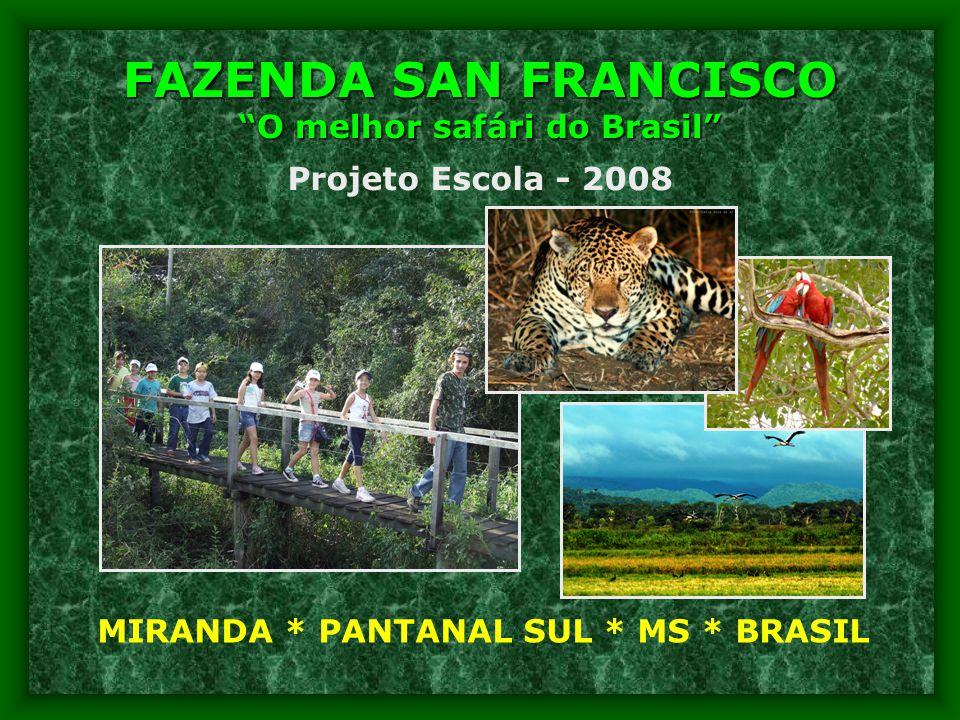 FAZENDA SAN FRANCISCO O melhor safári do Brasil MIRANDA * PANTANAL SUL * MS * BRASIL Projeto Escola - 2008