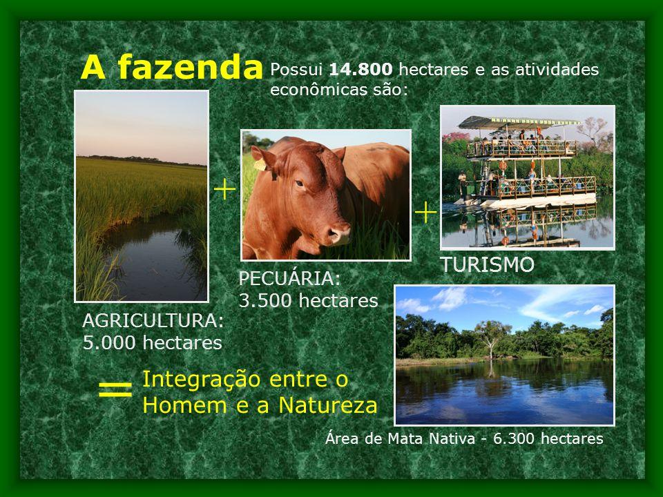 A fazenda Área de Mata Nativa - 6.300 hectares AGRICULTURA: 5.000 hectares PECUÁRIA: 3.500 hectares + = Integração entre o Homem e a Natureza Possui 14.800 hectares e as atividades econômicas são: + TURISMO