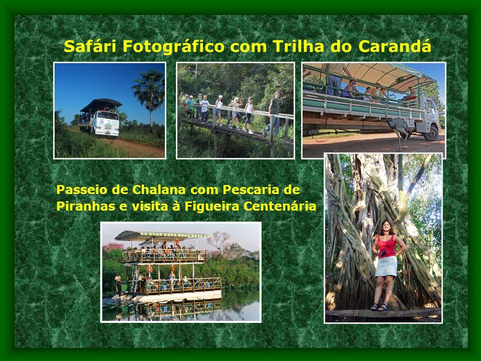 Safári Fotográfico com Trilha do Carandá Passeio de Chalana com Pescaria de Piranhas e visita à Figueira Centenária