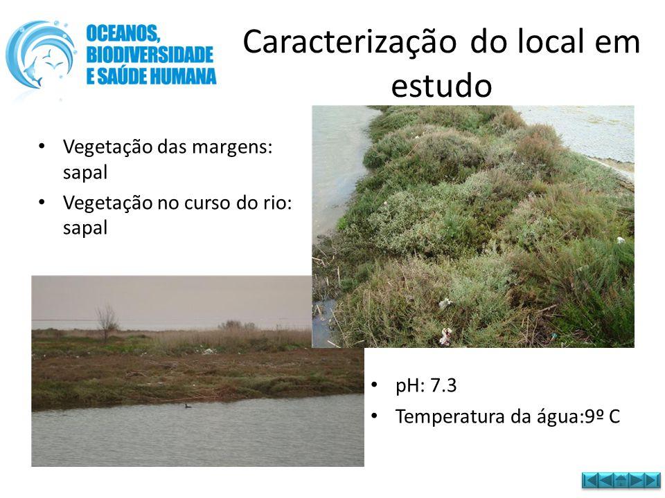 • Vegetação das margens: sapal • Vegetação no curso do rio: sapal Caracterização do local em estudo • pH: 7.3 • Temperatura da água:9º C