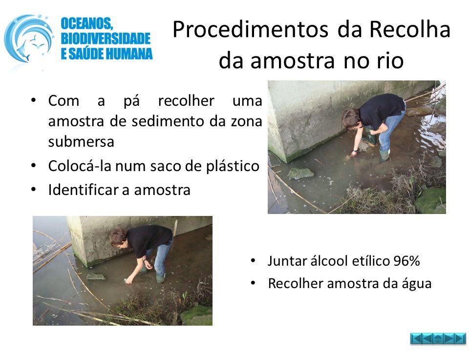 Procedimentos da Recolha da amostra no rio • Com a pá recolher uma amostra de sedimento da zona submersa • Colocá-la num saco de plástico • Identifica