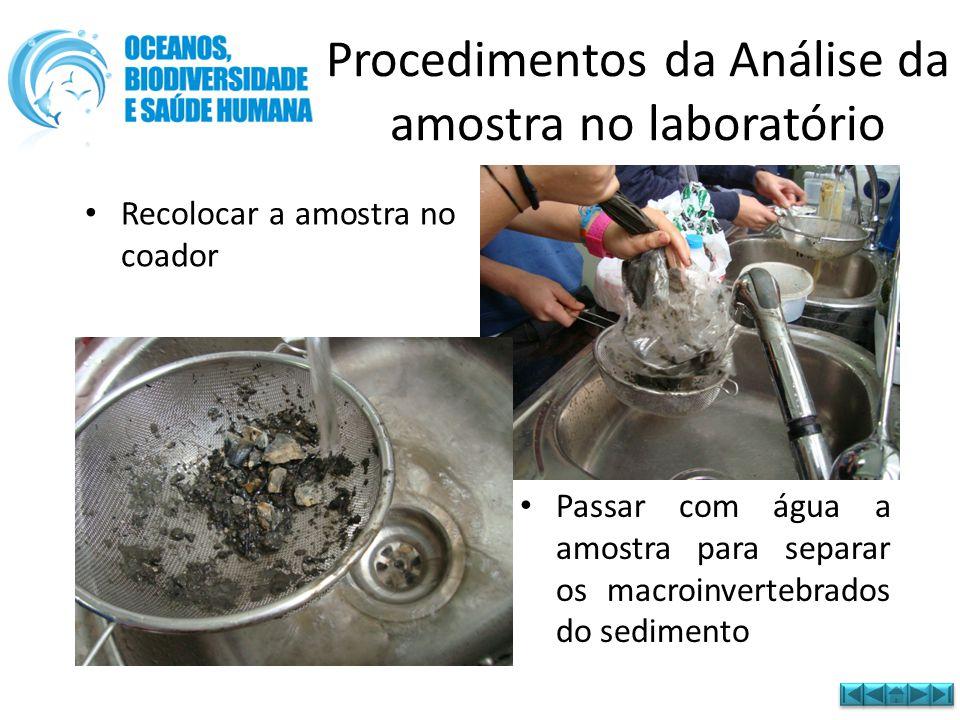 Procedimentos da Análise da amostra no laboratório • Recolocar a amostra no coador • Passar com água a amostra para separar os macroinvertebrados do s