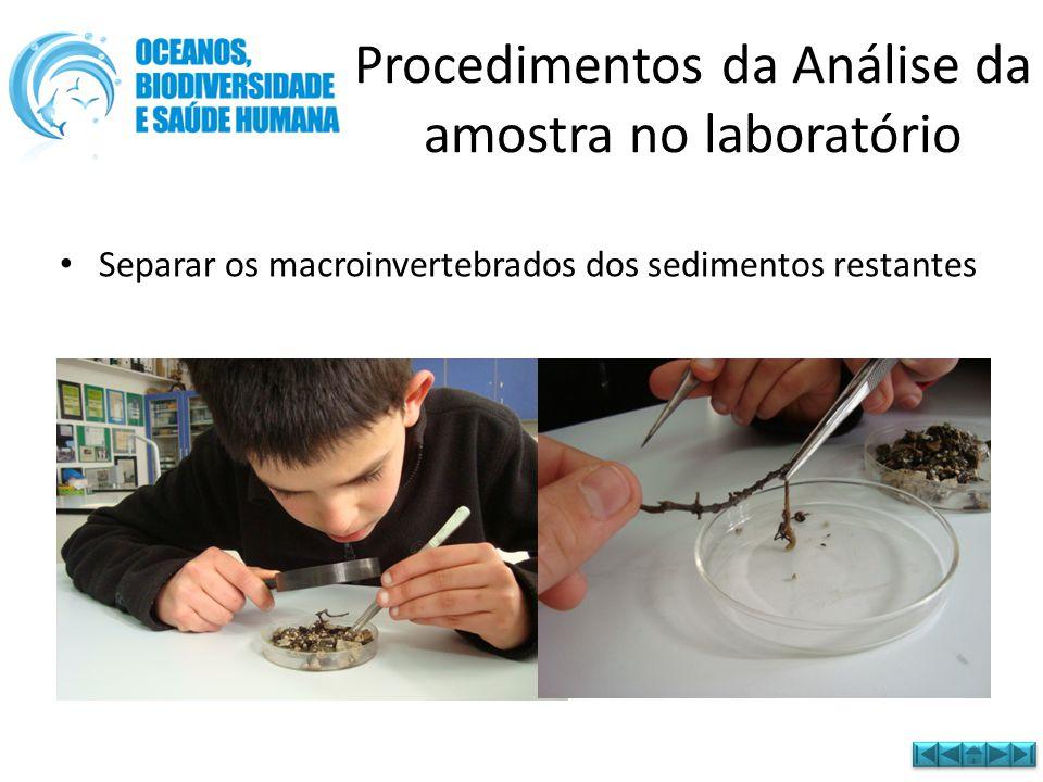 • Separar os macroinvertebrados dos sedimentos restantes Procedimentos da Análise da amostra no laboratório