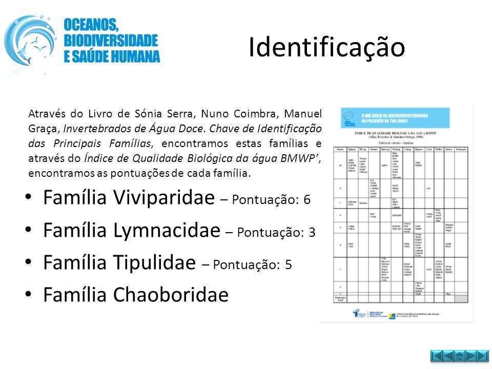 Identificação • Família Viviparidae – Pontuação: 6 • Família Lymnacidae – Pontuação: 3 • Família Tipulidae – Pontuação: 5 • Família Chaoboridae Atravé