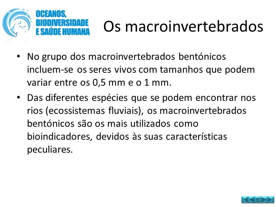 Os macroinvertebrados • No grupo dos macroinvertebrados bentónicos incluem-se os seres vivos com tamanhos que podem variar entre os 0,5 mm e o 1 mm. •
