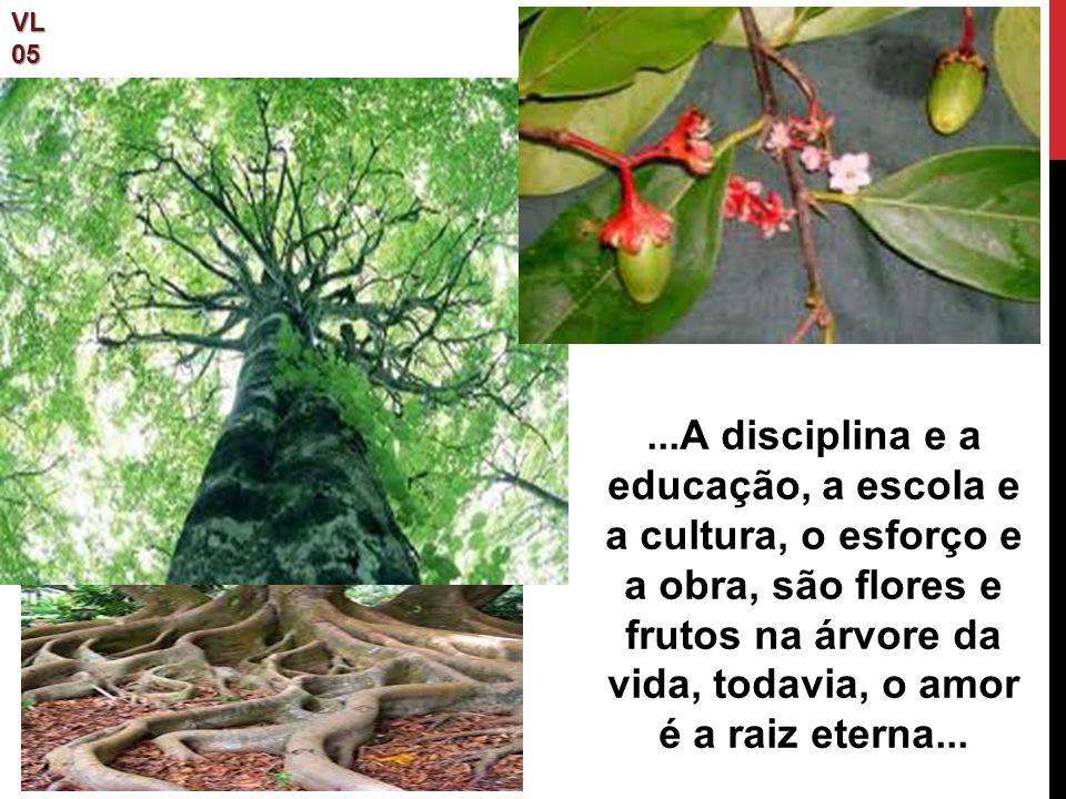 VL05...A disciplina e a educação, a escola e a cultura, o esforço e a obra, são flores e frutos na árvore da vida, todavia, o amor é a raiz eterna...