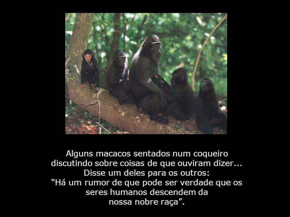 Homens ou Macacos