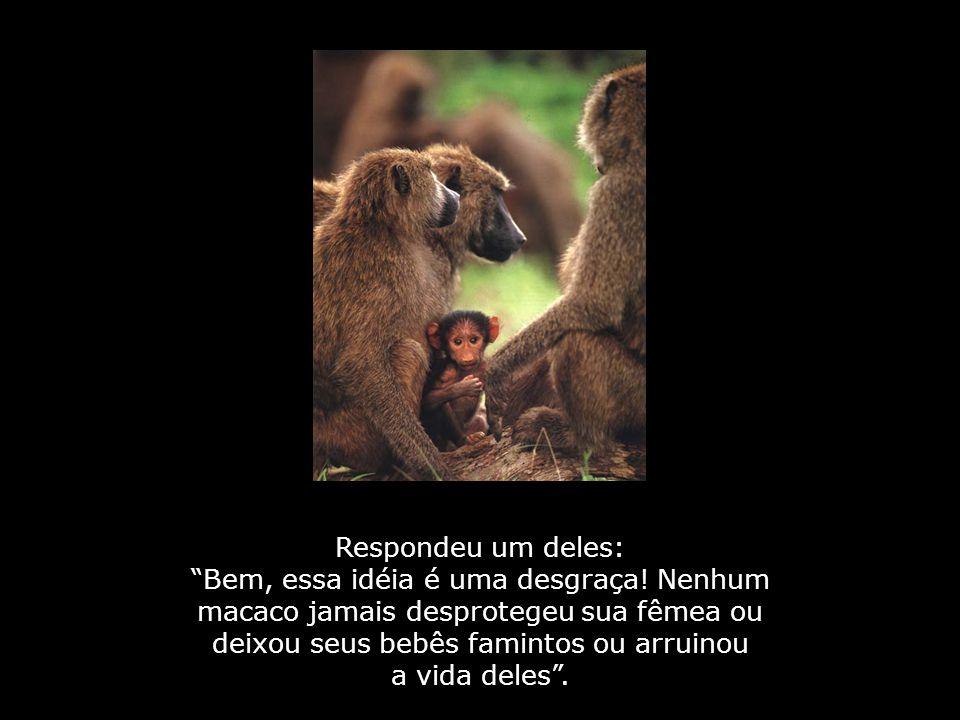 Alguns macacos sentados num coqueiro discutindo sobre coisas de que ouviram dizer...
