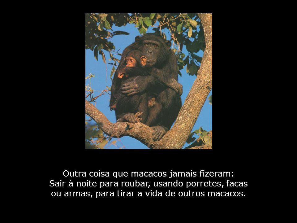 Há, também, uma outra coisa que nunca foi vista entre nós: Macacos cercando um coqueiro e deixando os cocos apodrecerem, proibindo outros macacos de se alimentarem, já que, se a árvore fosse cercada, a fome faria outros macacos nos roubarem.