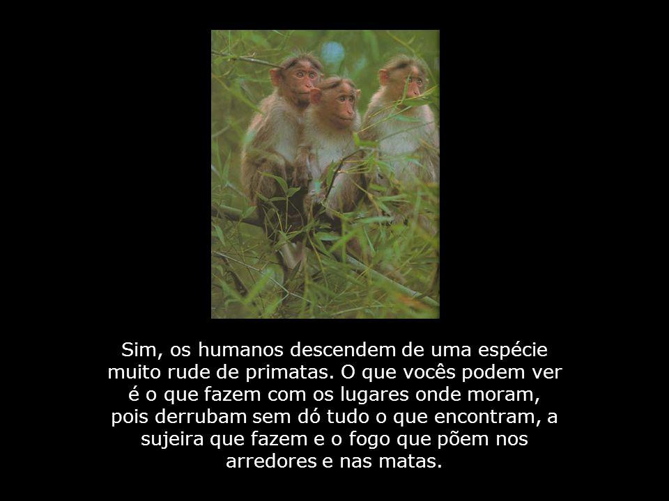 Outra coisa que macacos jamais fizeram: Sair à noite para roubar, usando porretes, facas ou armas, para tirar a vida de outros macacos.