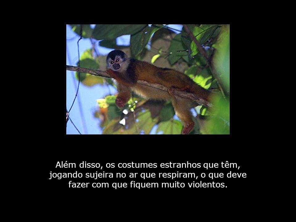Sim, os humanos descendem de uma espécie muito rude de primatas.
