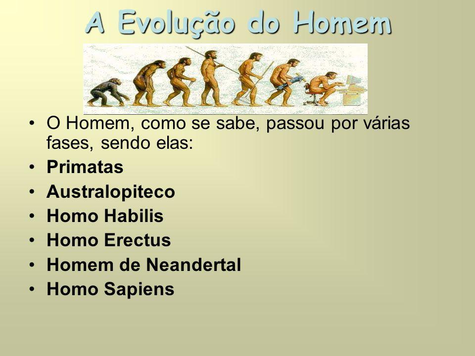A Evolução do Homem •O Homem, como se sabe, passou por várias fases, sendo elas: •Primatas •Australopiteco •Homo Habilis •Homo Erectus •Homem de Neandertal •Homo Sapiens