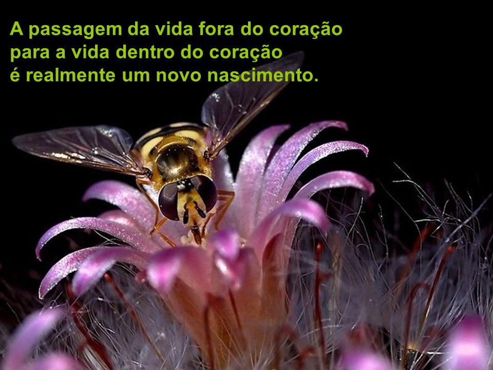 A Vida Dentro do Cora ç ão Mensagem – por Mestre RAM 13/5/09 http://www.autresdimensions.com/article.php?produit=304
