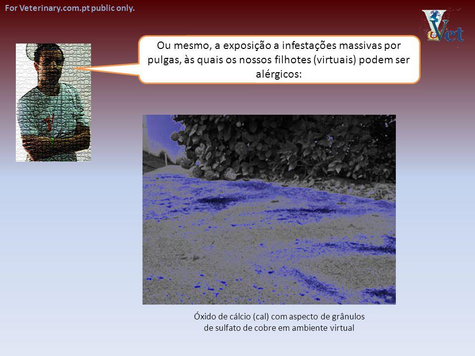 Ou mesmo, a exposição a infestações massivas por pulgas, às quais os nossos filhotes (virtuais) podem ser alérgicos: Óxido de cálcio (cal) com aspecto