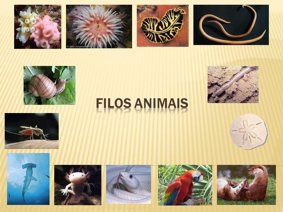  Compreende vermes de corpo cilíndrico, alongado e segmentado.
