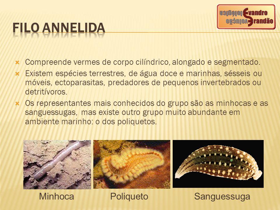  Compreende vermes de corpo cilíndrico, alongado e segmentado.  Existem espécies terrestres, de água doce e marinhas, sésseis ou móveis, ectoparasit