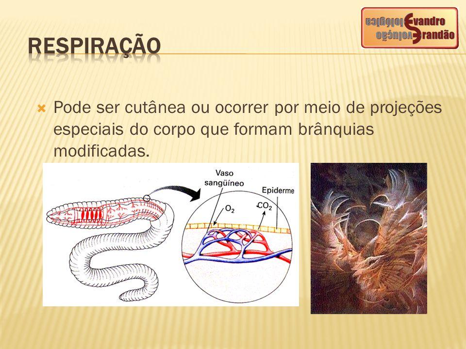  Pode ser cutânea ou ocorrer por meio de projeções especiais do corpo que formam brânquias modificadas.