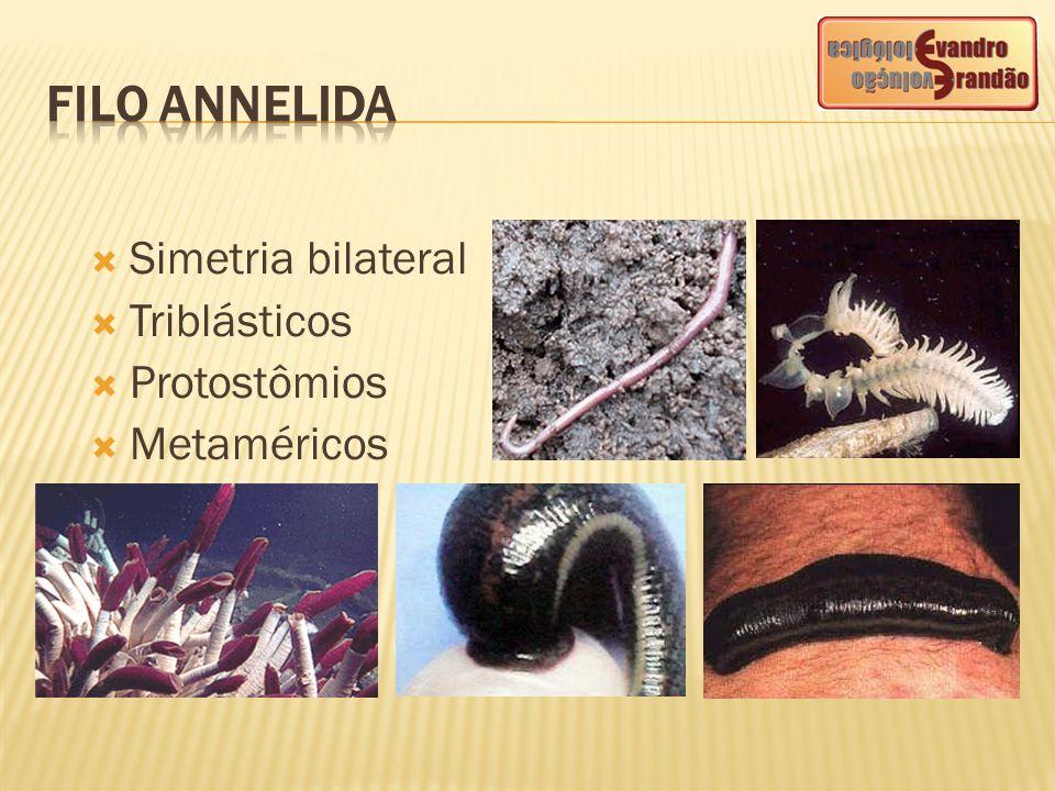 CLASSESEXEMPLOSCARACTERÍSTICAS Oligochaeta (oligoqueta) Minhoca, minhocuçu, Tubifex Apresentam poucas cerdas no corpo.