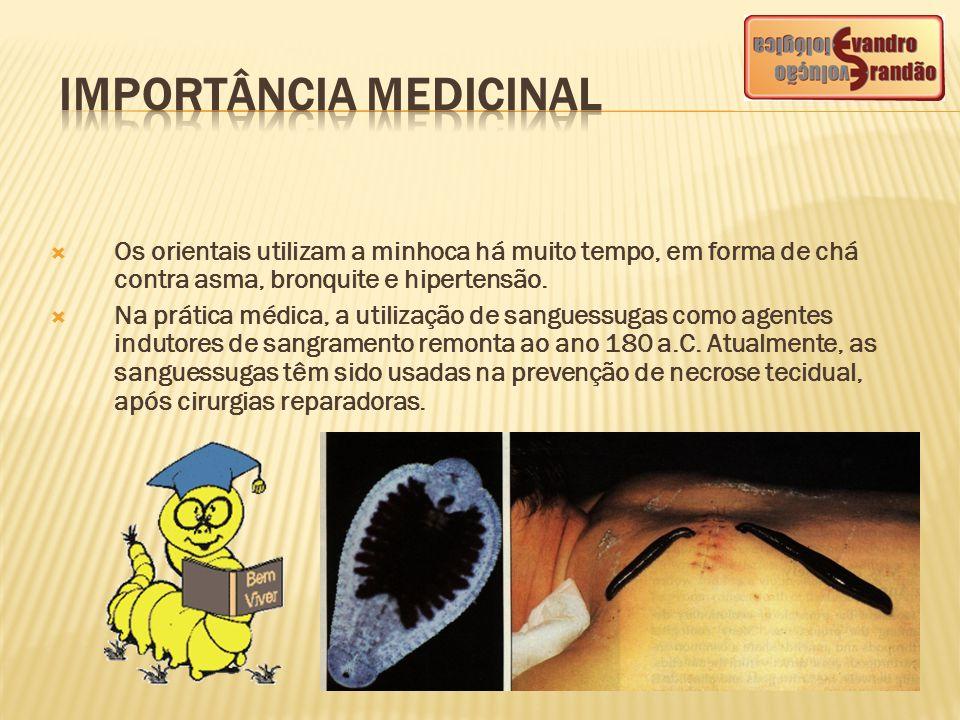  Os orientais utilizam a minhoca há muito tempo, em forma de chá contra asma, bronquite e hipertensão.  Na prática médica, a utilização de sanguessu