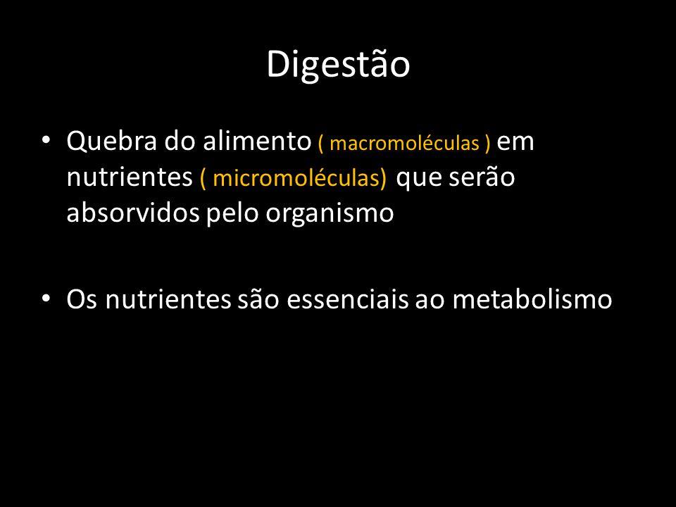 • Quebra do alimento ( macromoléculas ) em nutrientes ( micromoléculas) que serão absorvidos pelo organismo • Os nutrientes são essenciais ao metaboli